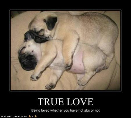 cute-puppy-pictures-true-love